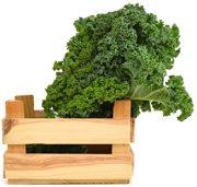 Alkaline Diet Foods - Kale